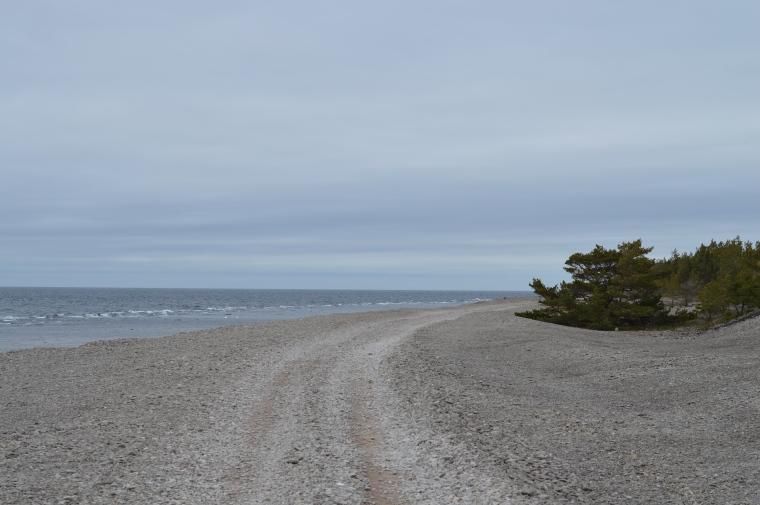 Gotland februari 2017 004.JPG