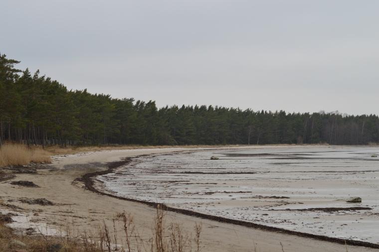 Gotland februari 2017 007.JPG