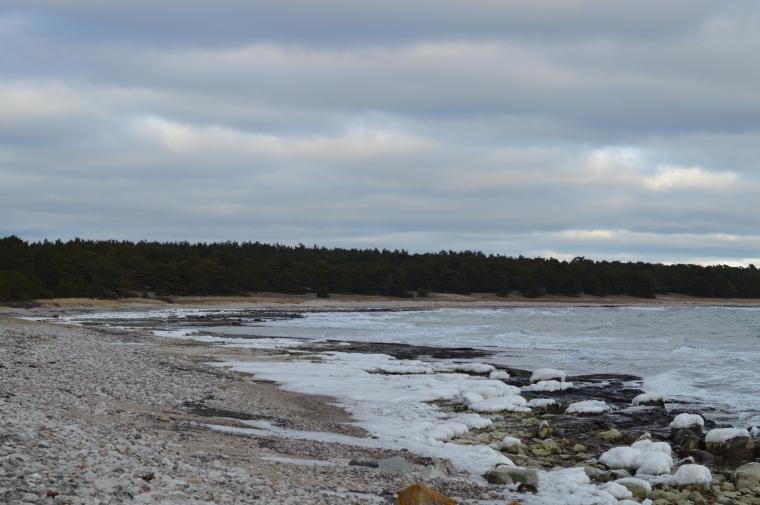 Gotland februari 2017 010.JPG