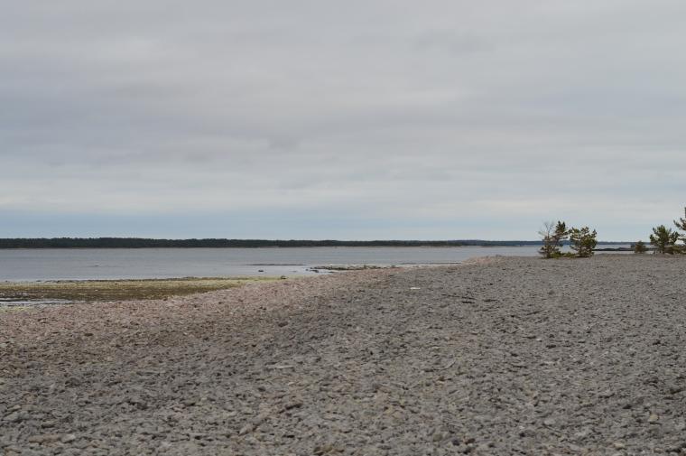 Gotland februari 2017 019.JPG