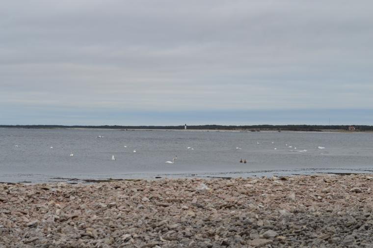 Gotland februari 2017 020.JPG