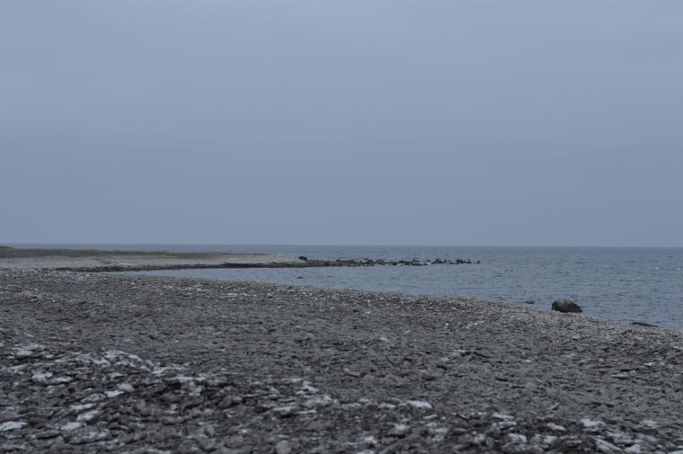Gotland februari 2017 021.JPG